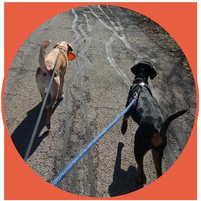 Amanda K Pet Sitters - Dog Walking & Pet Sitting Libertyville & Lake